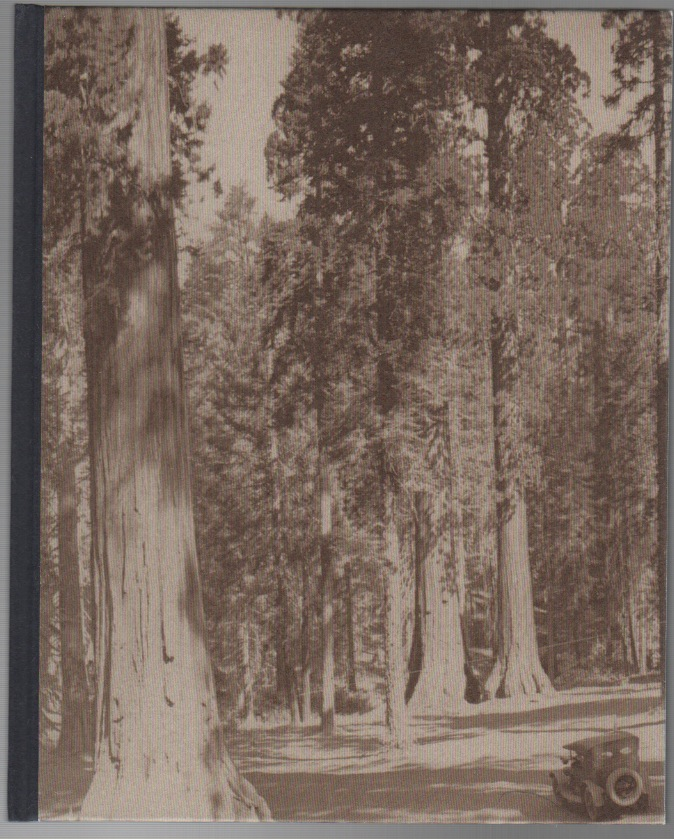 SOME TREES. Paul ANDRIESSE.